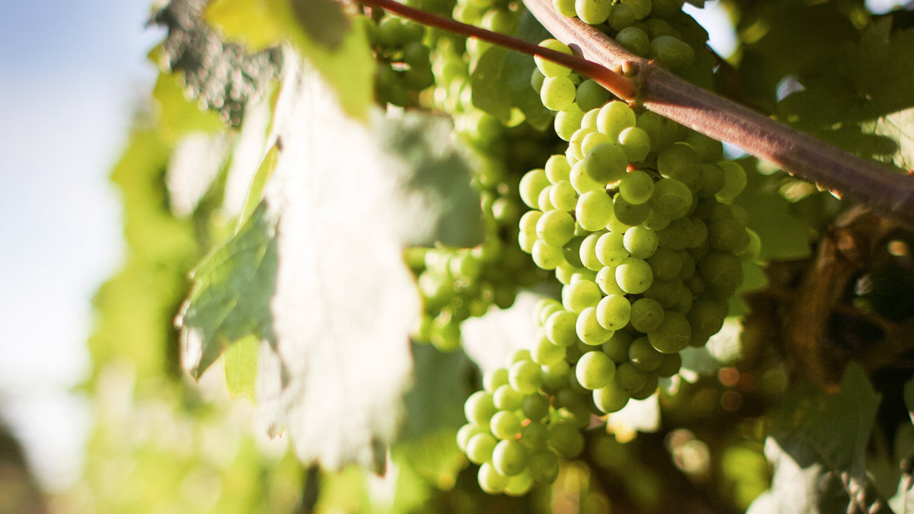 ¿Cómo reconocer un buen vino?